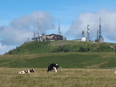 美ヶ原高原の牛と王ヶ頭ホテル