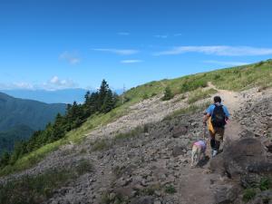 岩場を歩く犬