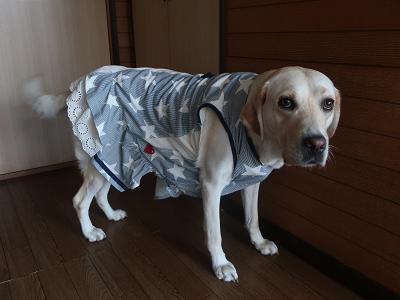 可愛い犬服
