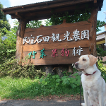 犬連れ軽井沢|野菜果物食べ放題!8月の石田観光農園の楽しみ方