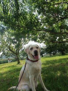 木陰で休息する犬