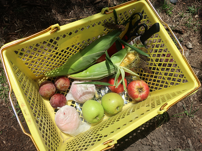 収穫した野菜果物