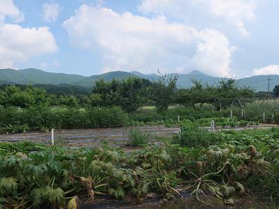 山に囲まれた農園