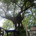 犬連れ軽井沢|群馬県と長野県の県境を体感!旧碓氷峠見晴台・熊野皇大神社