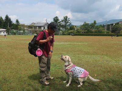 犬とボール遊び