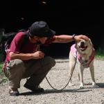 犬が飼い主にマウンティングする理由は愛情表現?