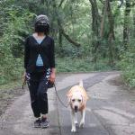 成犬のしつけは犬と仲良く暮らすことを目指す