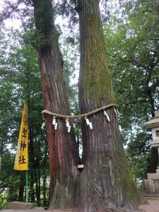 聖神社ご神木