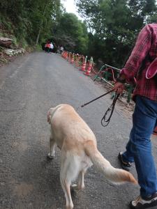 坂道を歩く犬