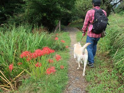 山道を歩く犬と彼岸花