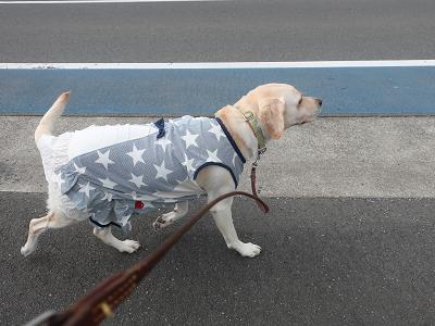 ご機嫌で歩く犬