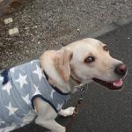 犬の散歩の適切な時間やコースは犬に任せてみよう