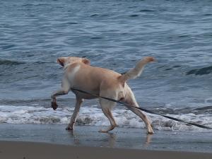 海で遊ぶ犬