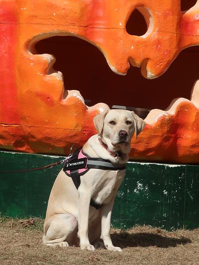 ハロウィンのかぼちゃと犬