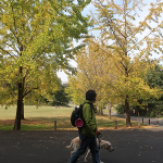 秋に気をつけたい犬の病気と健康に過ごすための対策