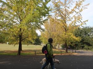 銀杏並木を散歩する犬