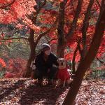 犬連れ長瀞|紅葉の月の石もみじ公園