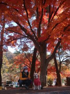 月の石もみじ公園紅葉と犬