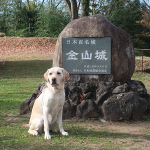 犬連れ金山城址|落城知らず!石垣造りの山城を散策