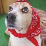 保護犬を救え!「ピースワンコ」は殺処分ゼロ継続を目指します