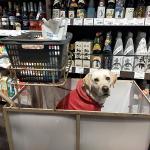 犬の飼い主はなぜホームセンターに犬を連れて行きたがるの?