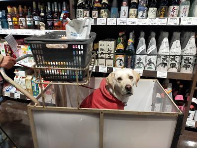 ホームセンターのカートに乗る犬