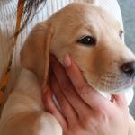 子犬の1歳の誕生日はパピーウォーカーにとって特別なもの
