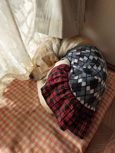 日向ぼっこしながら寝る犬