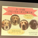 委託終了式|盲導犬パピー2回目の別れ
