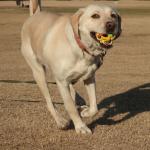 【動画】犬の「持ってこい」の教え方は?犬と楽しく遊ぼう