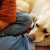 人の足に顎を乗せる犬