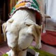 フードを食べる犬