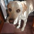 上目づかいで何か言いたそうな犬
