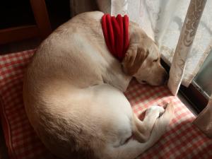 日向ぼっこをしながら寝る犬
