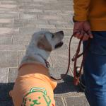 冬に気を付けたい犬の泌尿器系の病気|予防法とチェックポイント