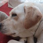 【体験談】犬の膿皮症の原因・症状・治療・完治まで