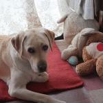 犬って時間が分かるの?約束の時間に飼い主の帰宅を待つ犬