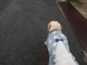 急ぎ足で歩く犬