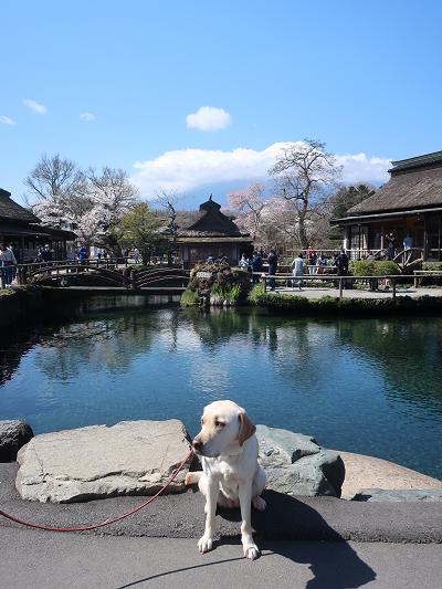涌池と富士山