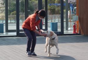 訓練士と遊ぶ犬