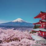 犬連れ富士山と桜旅|新倉山浅間公園