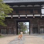 犬連れ小諸城址「懐古園」城下町より低い場所に築かれた穴城