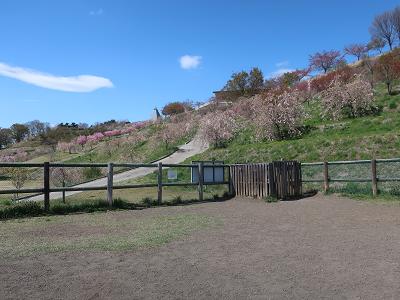 飯綱山公園ドッグラン