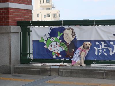 横断幕と犬