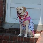 熱中症対策になるかな?犬にクールチューブ(ネッククーラー)を着用させてみました