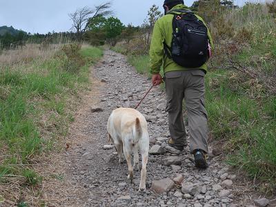 登山道を歩く犬