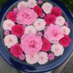 犬連れ行田花手水Week|街中に映える美しすぎる花たち