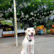 ブドウと犬
