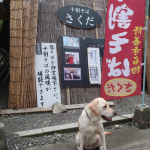 修善寺温泉街道の十割そば「さくだ」ワンコイン&お犬様歓迎だよ