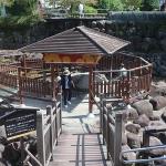 犬と歩く修善寺温泉街道|伊豆の小京都を楽しもう